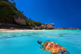 Green Turtle at Similan Islands — Stock Photo