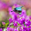 Blue Swallowtail Butterfly — Stock Photo #49032967