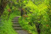 Balinese jungle — Stock Photo