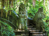 Ubud Monkey Forest — Stock Photo