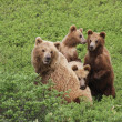Stock Photo: Three cub and bear