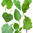 Royalty-Free Stock Photo: Set of leaf vegetables