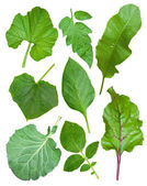 Set of leaf vegetables — Stock Photo