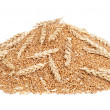Pile of wheat grains — Stock Photo