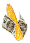 An ear of corn with the money — Foto Stock