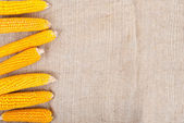 Ripe ears of corn on a background of burlap — Stock Photo
