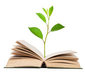 Green sprout growing from open book — Stock Photo