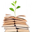 Green sprout growing from open books — Stock Photo