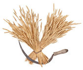 Sheaves of wheat and sickle — Stock Photo