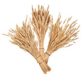 Sheaves of wheat — Stock Photo