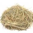 Stock Photo: Empty birds nest