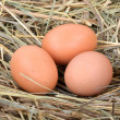 Eggs in the hay — Stock Photo