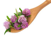 Clover flower tea on the wooden spoon  — Stock Photo