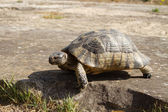 Turtle outdoors in Greece — Stock Photo