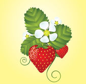 Strawberry floral background — Stock Vector