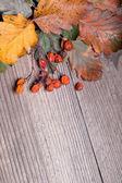 Bacche di sorbo — Foto Stock