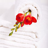 White towel and red fresia flowers — Stockfoto