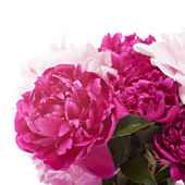 Peonies flowers — Stock Photo