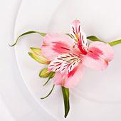 Spring decoration with pink alstromeria — Stock Photo