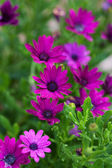 Summer flowers outdoor — Stock Photo
