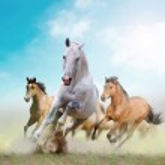 Horses — Stock Photo