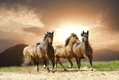 Horses run — Stock Photo