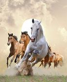 Paarden in zonsondergang — Stockfoto