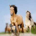 Wild horses — Stock Photo #13983284