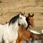 Wild horses — Stock Photo #13983311
