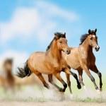 Horses — Stock Photo #16970053