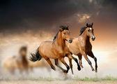Koně při západu slunce — Stock fotografie