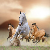 Horses in sunset — Stock Photo