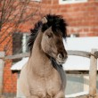 Grey horse - Stockfoto