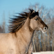 Wild gray horse — Stock Photo #19237749