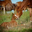 Mare and foal in pasture — Stock Photo