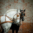 Horses carriage — Stock Photo