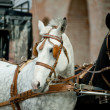 Horse carriage — Stock Photo #31961413