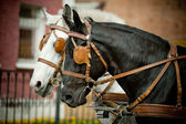 Horses in carriage — Stock Photo