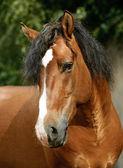 Horse run — Stock Photo