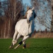 Stock Photo: White horse