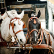 Horse carriage in city — Stock Photo #36200025