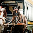 Stock Photo: Horse carriage in city