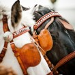Horses closeup — Stock Photo #36200033