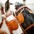 Stock Photo: Horses closeup