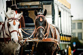 Horse carriage in city — Stock Photo