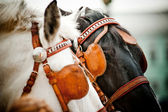 Horses closeup — Stock Photo