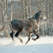 Stock Photo: Horse in winter forest