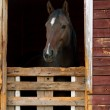 Horse in stable — Stock Photo #39898355