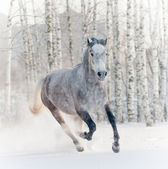 Horse in winter forest — Stock Photo