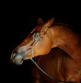 Horse on black — Stock Photo